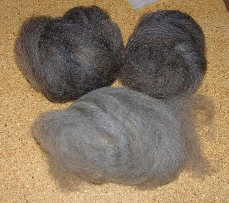 combed grey Romney