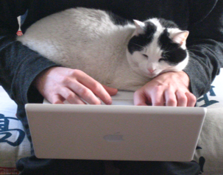 catreadsmail.png
