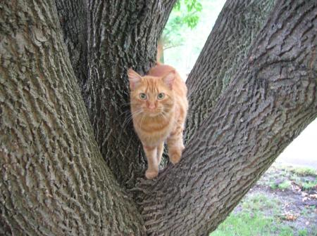 kitty in the tree 8-20-07